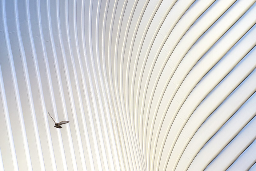 Oculus World Trade Centre Transportation Hub